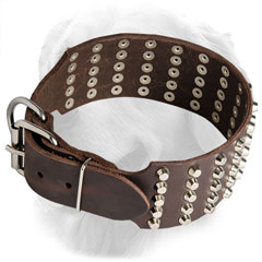 Golden Retriever Collar with Super Strong Nickel Plated Buckle