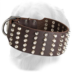 Wide Golden Retriever Collar with Nickel Plated Studs