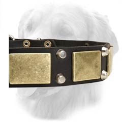 Stylish Leather Collar