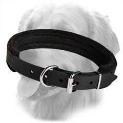 Leather Collar for Training Activiies