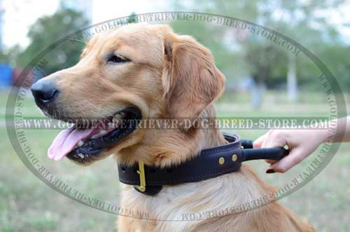 Leather Collar for Active Dogs