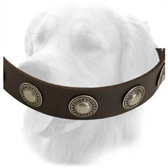 Leather Collar for Walking in Style