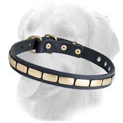 Golden Retriever Leather Dog Collar Brass Plates