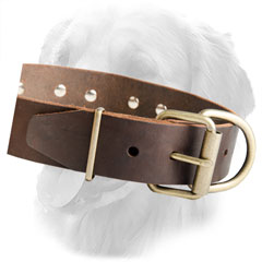Leather Collar with Rustproof Hardware