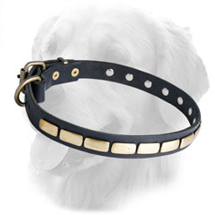Golden Retriever Leather Dog Collar Steel Old Brass Plated Fittings