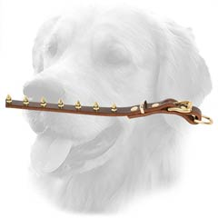 Golden Retriever Spiked Leather Collar