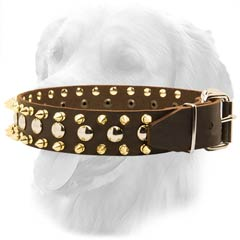 Golden Retriever Leather Collar with Spikes and Studs