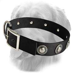 Stylish Collar with Silver Conchos