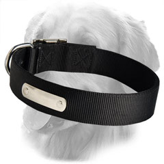 Nylon Collar with ID Tag