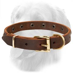 Golden Retriever Leather Collar Special Brass Buckle