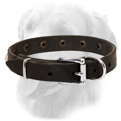 Golden Retriever Leather Collar Special Nickel Buckle