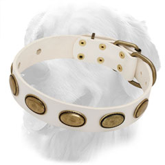 Golden Retriever Leather Collar of White Color