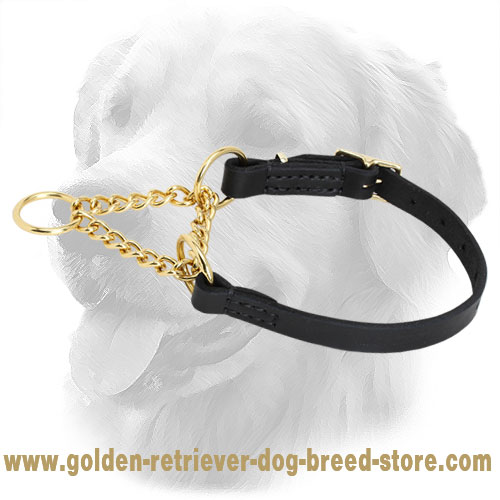 Solid and Strong Golden Retriever Martingale Collar for Training