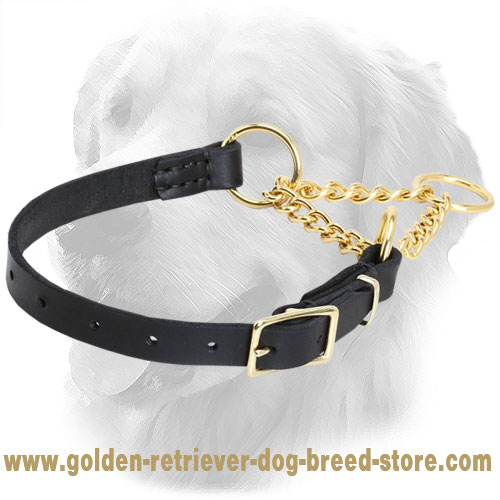 Golden Retriever Martingale Collar with Durable Leather Part