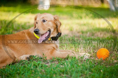 Easy Adjustable Golden Retriever Collar