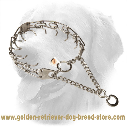 Golden Retriever Pinch Collar with Rustproof Prongs
