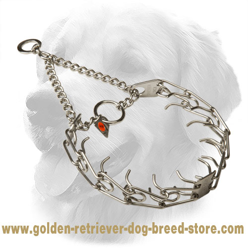 Golden Retriever Pinch Collar for Dog Training