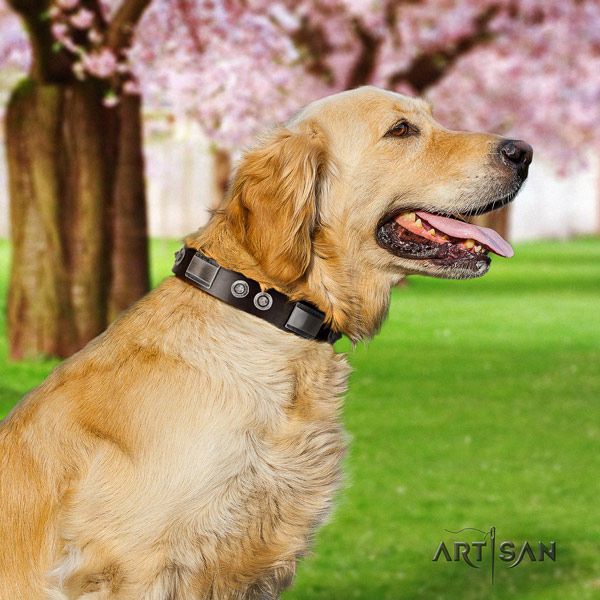 Golden Retriever easy wearing full grain leather collar for your attractive dog