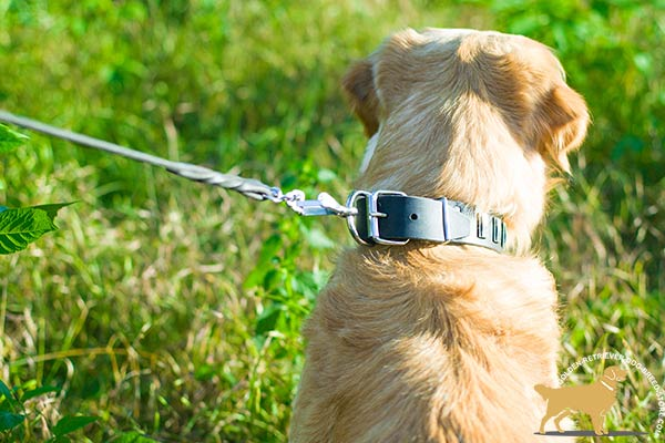 Golden Retriever black leather collar easy-to-adjust with riveted hardware for safe walking