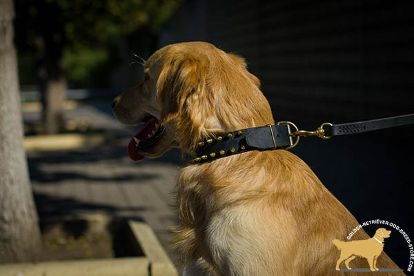 Golden Retriever black leather collar adjustable  with d-ring for leash attachment for daily walks