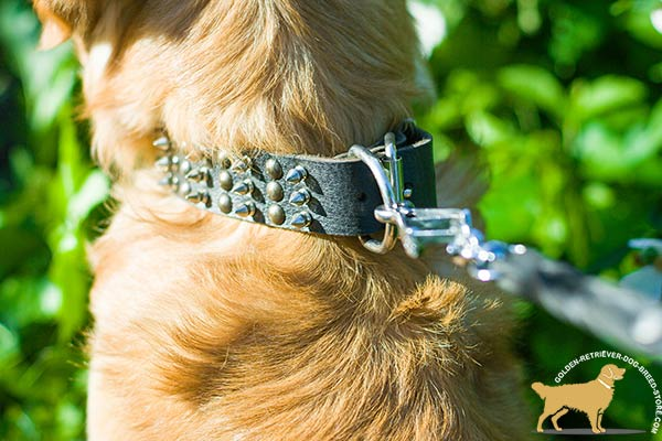 Golden-Retriever leather collar of genuine materials decorated with half-balls and spikes for daily activity