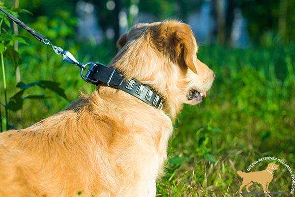 Golden Retriever black leather collar of genuine materials with plates placed in row for daily activity