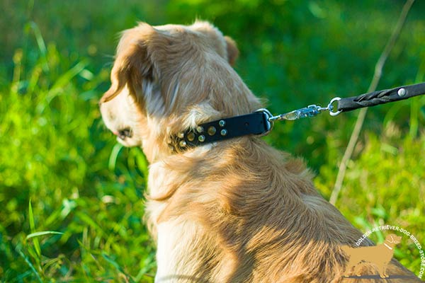 Golden-Retriever black leather collar of high quality decorated with cones for walking