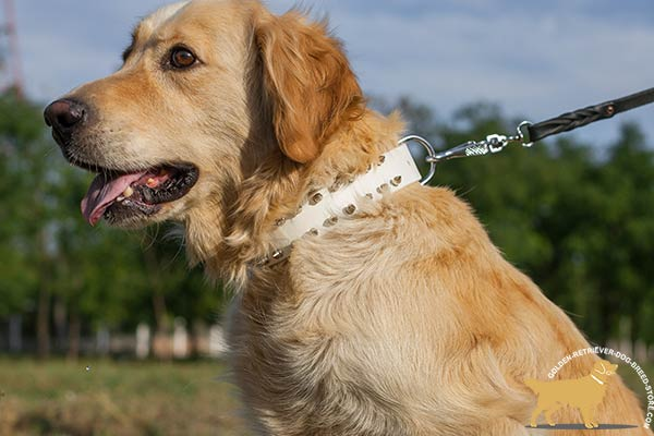 Golden Retriever leather collar with rust-resistant fittings for daily activity