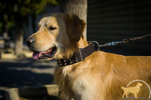 Golden-Retriever leather collar with rust-resistant fittings for stylish walks