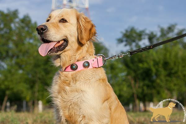 Golden Retriever leather collar with rustless fittings for walking
