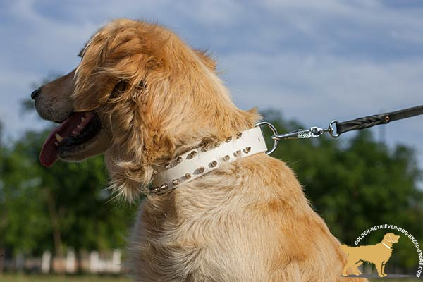 Golden Retriever leather collar with durable hardware for daily activity