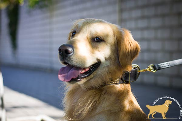 Golden-Retriever leather collar with vintage plates for basic training
