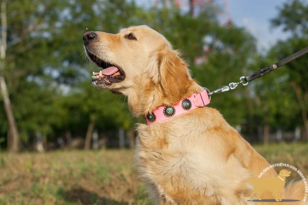 Golden Retriever leather collar adjustable  decorated with plates for walking in style
