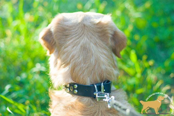 Golden-Retriever black leather collar wide with handset adornment for tracking