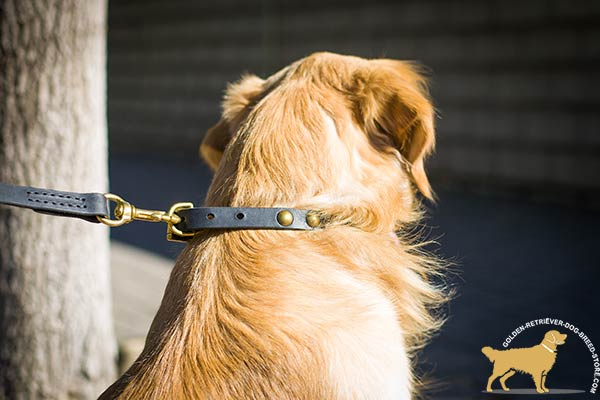 Classy Leather Golden Retriever Collar with Reliable Hardware