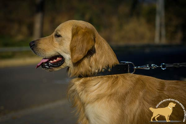 Leather Golden Retriever Collar with Row of Silvery Pyramids