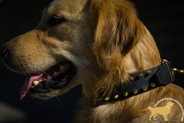 Leather Golden Retriever Collar with Spikes Set in 2 Rows