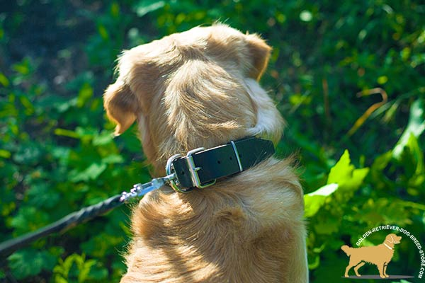 Decorated Leather Golden Retriever Collar with Sturdy Hardware