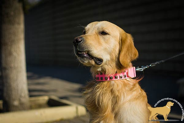 Pink Golden Retriever Collar with 2 Rows of Square Studs
