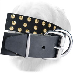 Solid Nickel Buckle on Golden Retriever Leather Collar