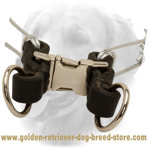 Quick Release Buckle on Chrome Plated Golden Retriever Pinch Collar