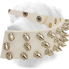 Nickel Spikes on Golden Retriever Leather Collar Steel