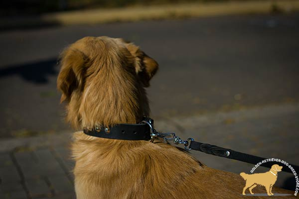 Easy-to-adjust Golden Retriever Collar with Nickel-plated Buckle