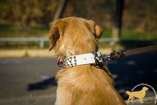 Walking Spiked Dog Collar with Nickel-plated Hardware