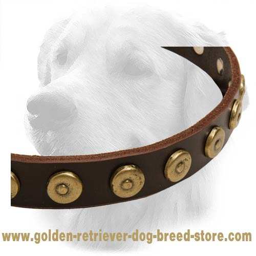 Golden Retriever Dog Leather Collar Brass Circles