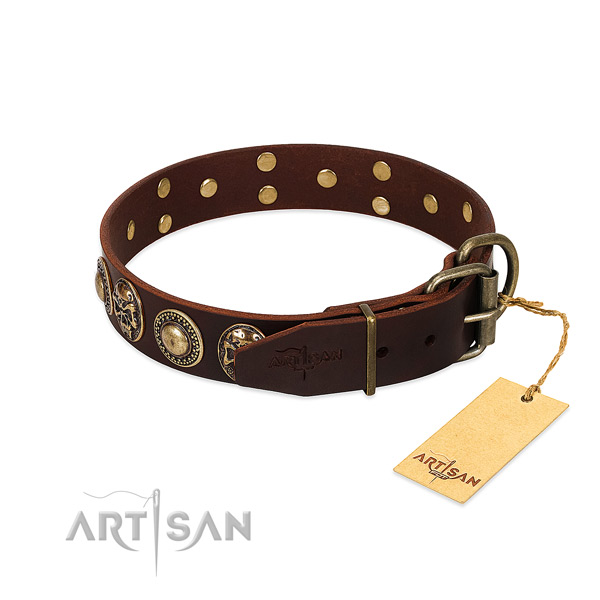 Rust-proof studs on daily walking dog collar