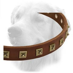Golden Retriever Collar With Brass Studs