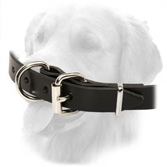 Golden Retriever Collar With Nickel Plated Hardware