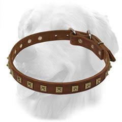 Golden Retriever Decorated Collar