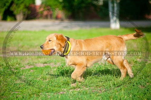 Golden Retriever Nylon Collar